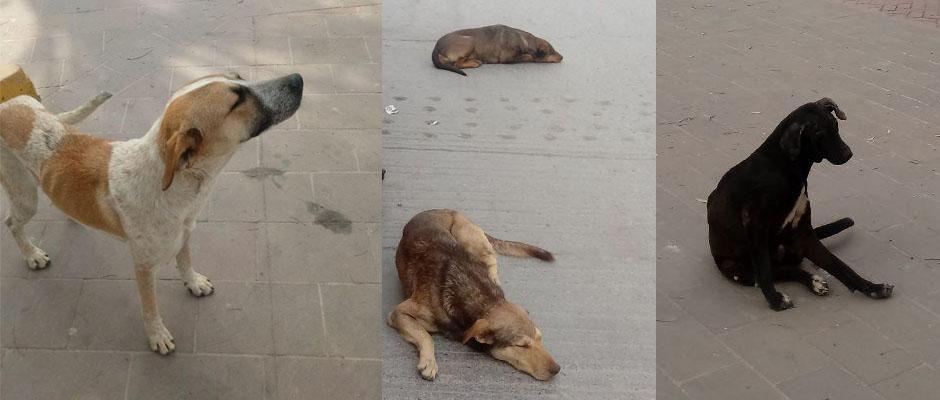 Crearán Centro de Control Canino