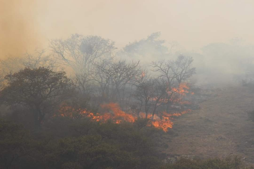 Incendios Forestales Podrían tener Trasfondo: Especialista