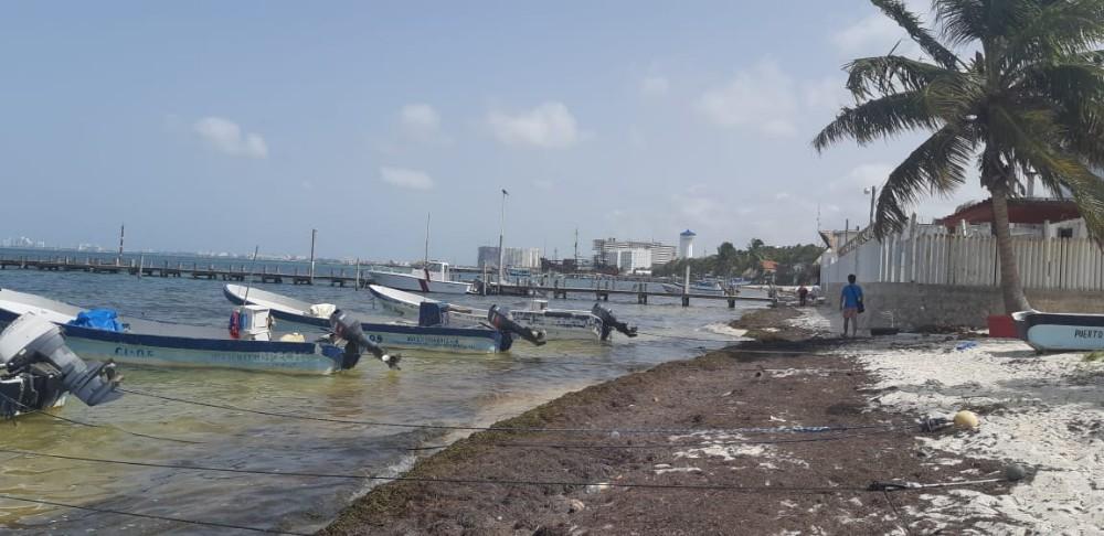 Sargazo en Quintana Roo 4
