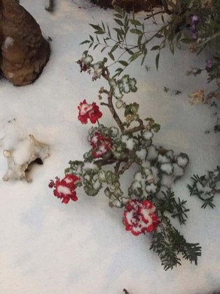 Real de Catorce-nevadas SLP-5