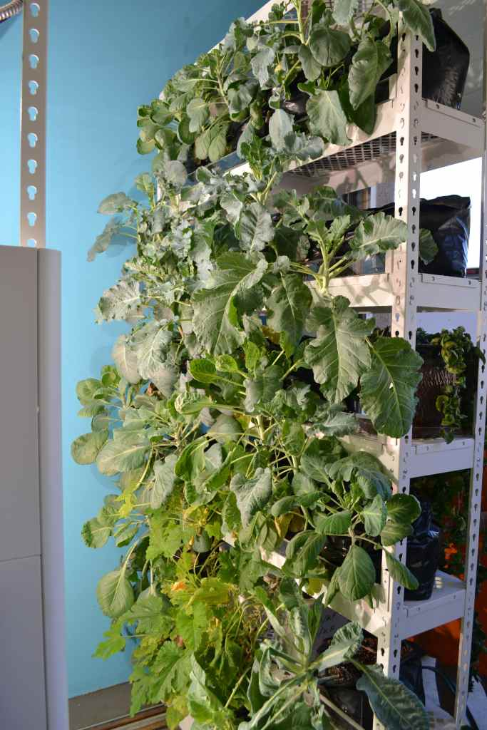 Vertical Growing system for plants