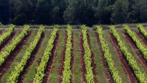 Biodiversidad en las viñas_2