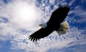Aquila-cielo