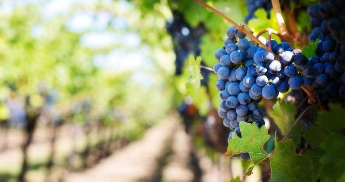 L'azienda Capolino Perlingieri dal 2003 produce i vini del Sannio