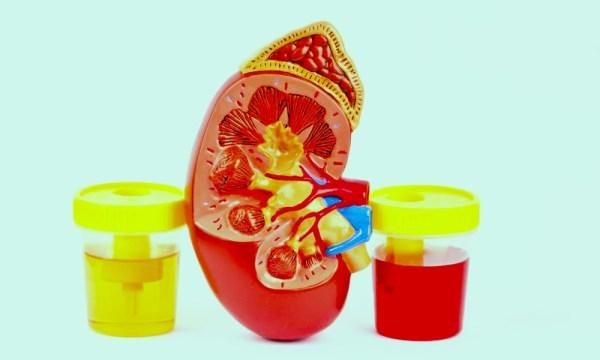 renal function