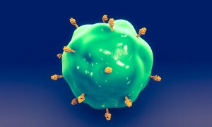 Antigens determinants