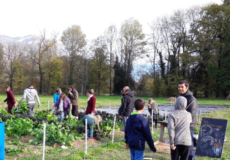 clients cueillant leurs légumes aux Labyrinthes Gourmands
