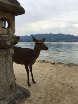 Deer roam around the island freely.