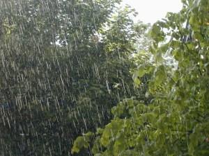 lluvias plantas