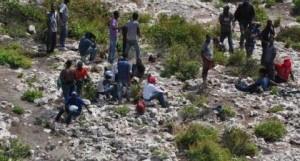 haitianos crop