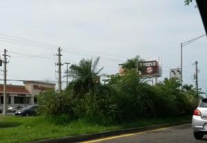 Condición actual de parte de la isleta de la carretera PR-2, frente a la urbanización Mayagüez Terrace.