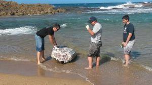 Personal del DRNA examina los restos del tinglar encontrado en Isabela (Suministrada DRNA).