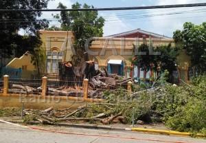 Resultado del corte de árboles en la escuela elemental David G. Farragut (Foto Radio CB Rescue Team).