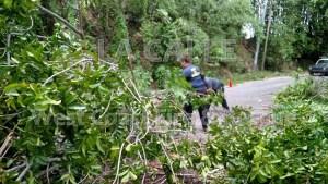 La labor de los voluntarios fue valiosa en la limpieza de carreteras obstruidas por árboles (Foto West Coast Fire & Rescue).