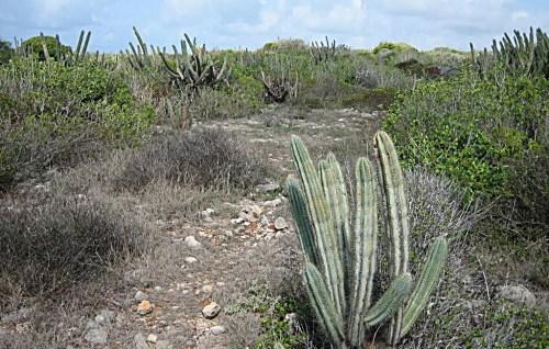 Parte del ecosistema del Bosque Seco de Guánica (Archivo).