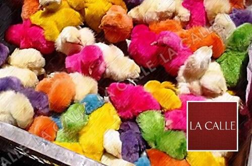 Se alega que para pintarlos, los pollitos son sometidos a un cruel proceso (Archivo).