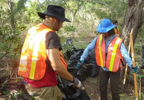 El proyecto es parte de los esfuerzos para restaurar el hábitat de la iguana de la Mona (Suministrada/UPR Aguadilla).