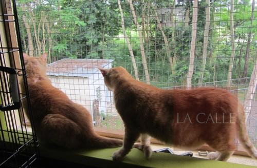 Una nueva sección para gatos se completo gracias a los donativos de la ciudadanía (Suministrada/SASFA).