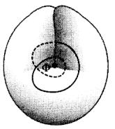 Zentralpunkt Φ