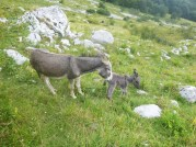Mom and baby donkey, near Kobarid, Slovenia
