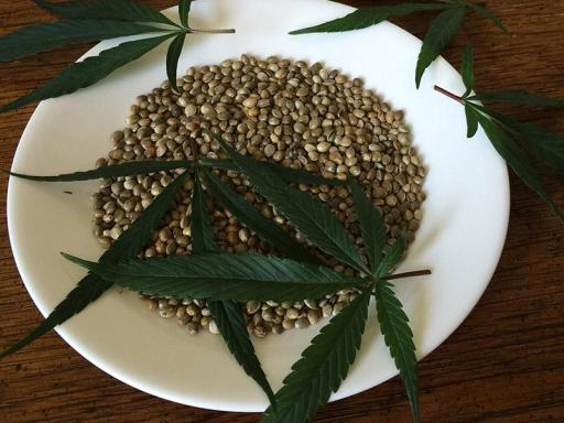 cannabis vasodilatatore