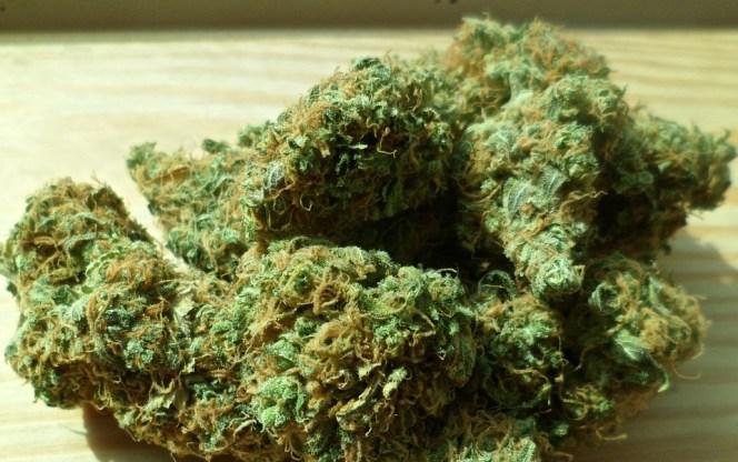cannabis-448661_960_720
