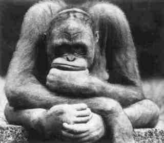 scimmia2dr6.jpg
