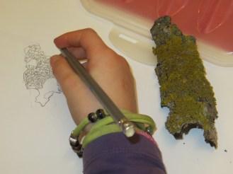 corteccia con lichene