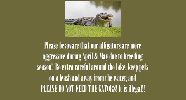 Alligator Warning – Spring 2021