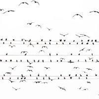 Los pájaros de Yoshinori Mizutani