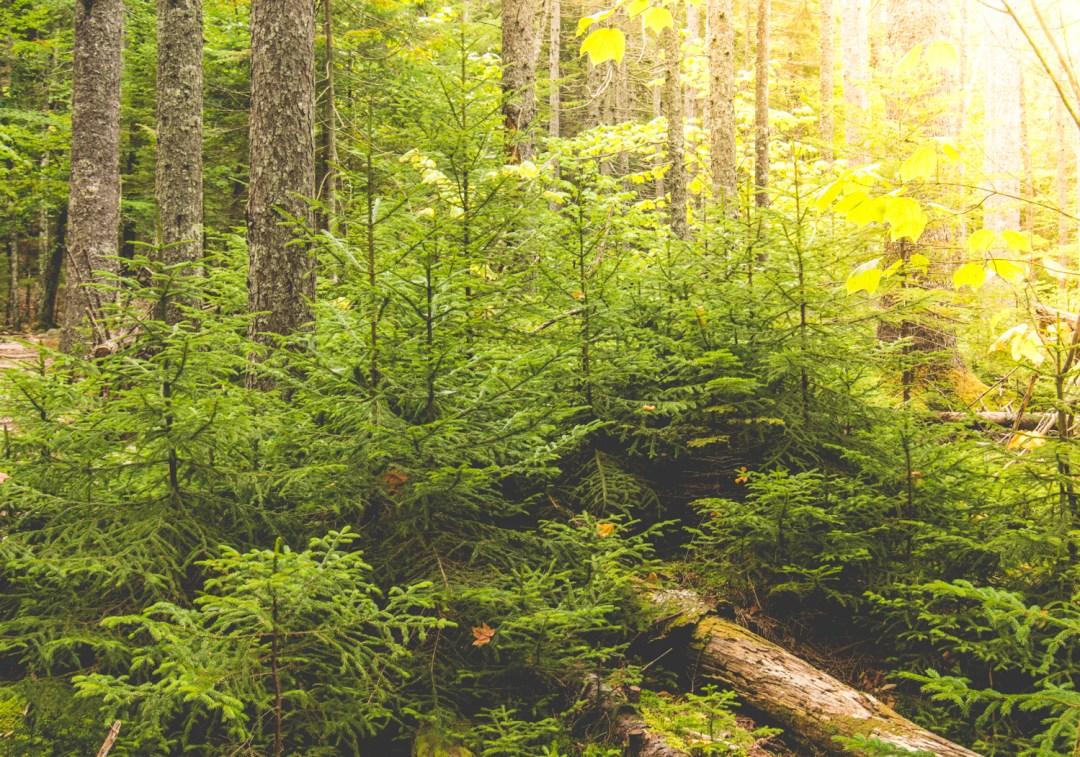 Acadia's Steep Pemetic Mountain Hike - Maine Travel - @lacegraceblog1