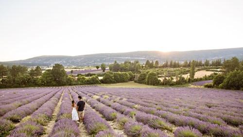petite fashion blog, lace and locks, morning lavender dress, white lace midi dress, provence lavender fields, sault lavender, travel blogger, lavender drone shot