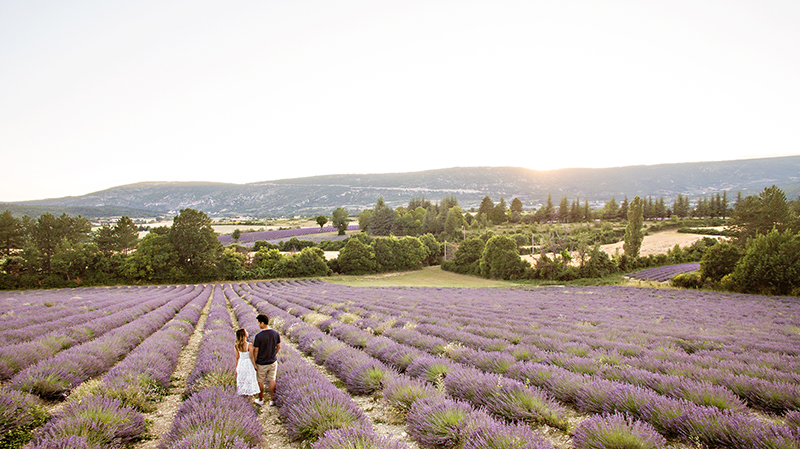 petite fashion blog, lace and locks, morning lavender dress, white lace midi dress, provence lavender fields, sault lavender, travel blogger, lavender drone shot