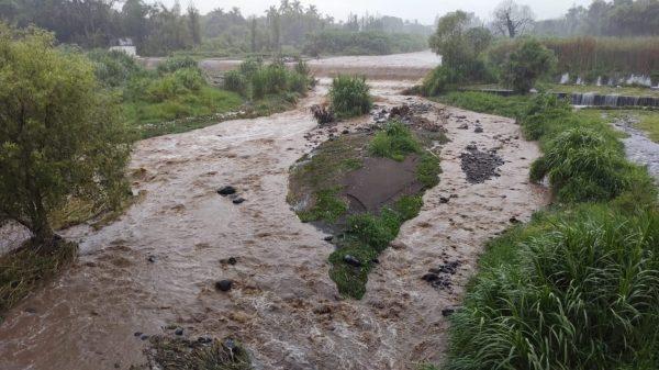 Alcanza Río Cuautla 60% de su nivel
