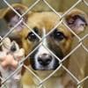 Maltrato animal en Morelos será castigado con multas que ascienden a los 4 mil pesos y hasta cuatro años de prisión