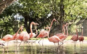 Zoofari - Centro de Conservación Morelos