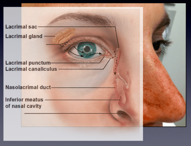 The lacrimal ducts drain at the medial canthus in to the nasolacrimal duct, which drains in to the nose.