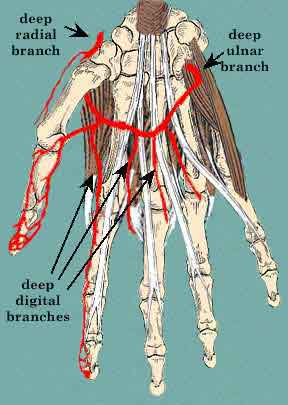 Vascular Injuries, Part I: Basic Principles & Pitfalls ...