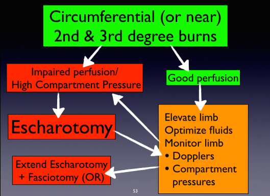 Escharotomy Algorithm