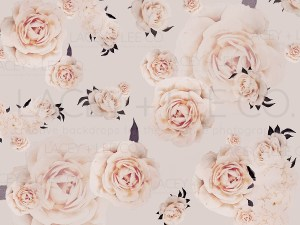 Blooming Roses Photo Backdrop