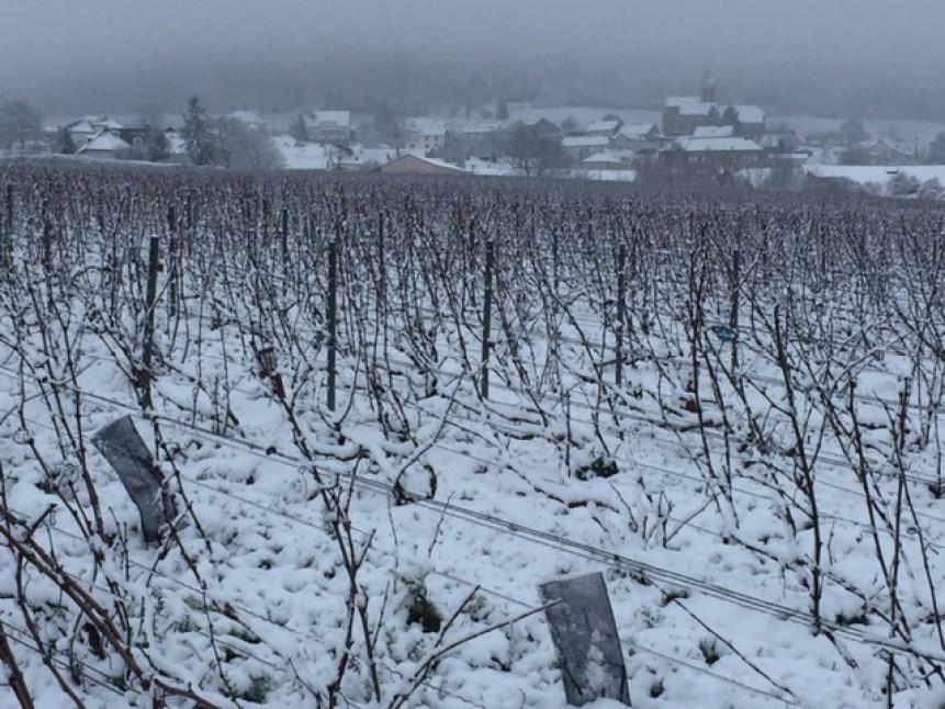 Neige en Champagne février 2018, du côté de Cuis sur la Côte des Blancs