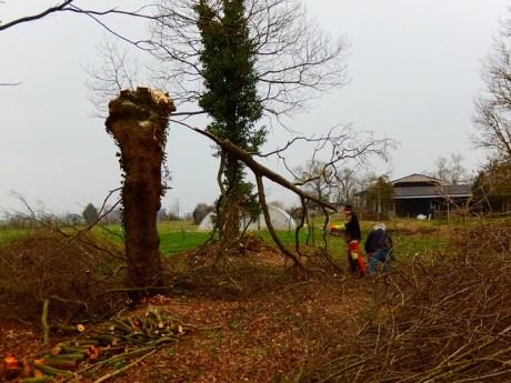 les chênes sont taillés selon la méthode traditionnelle des ragolles, appelés aussi arbres têtards.