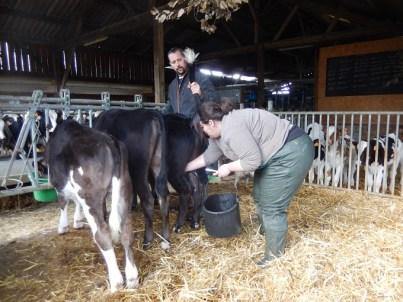 Limousin, né le 26 août 2015, est sur le point de devenir un boeuf.
