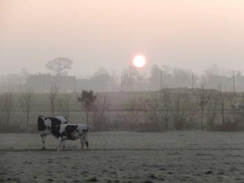 câlin du matin, qui sont encore bien frais.