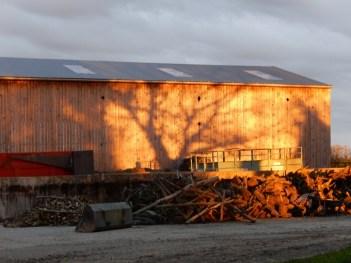 hangar ombre arbre