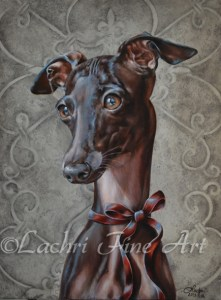 Pia, Italian Greyhound