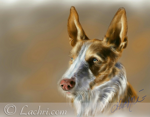 Fuzz, Ibizan Hound Digital Painting