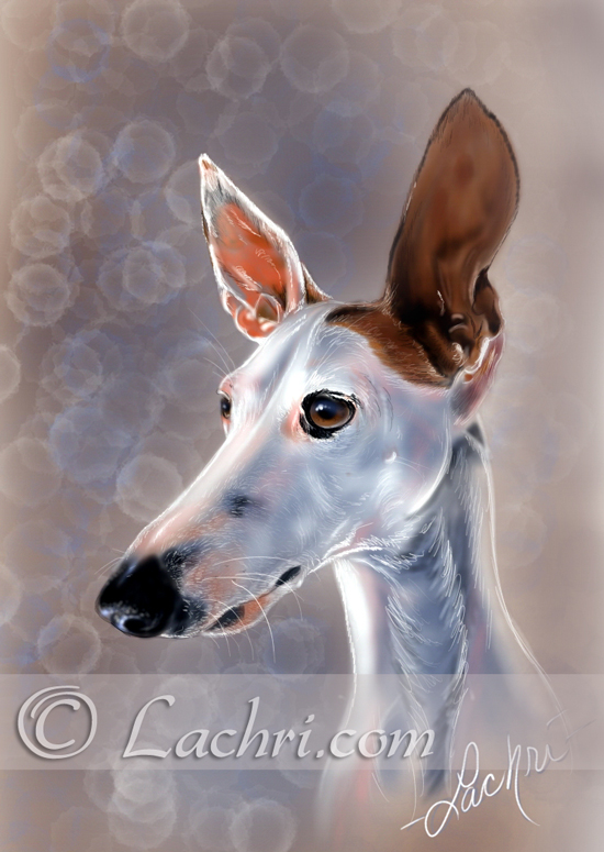 Roo, Italian Greyhound Digital painting