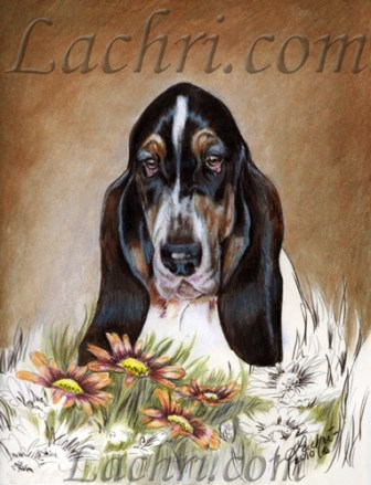 Basset Hound colored pencil and marker portrait