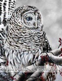 Barred owl oil over acrylic painting
